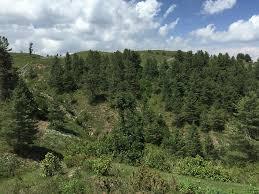 free photo mountain landscape outdoor tree free image on