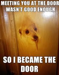 Orange Dog Meme - overly attached dog meme by wobufet memedroid