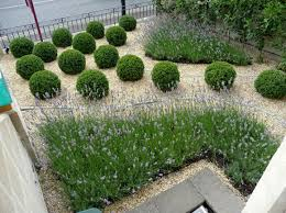 small garden design ideas images