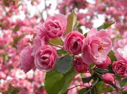 flowering trees for garden shade and www coolgarden me