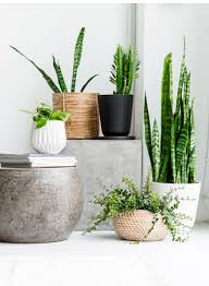 styling with plants home indoor plants pinterest plants
