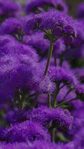 1244 best purple flowers u0026 plants images on pinterest purple