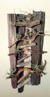 222 best as light as air plants images on pinterest air plants
