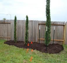italian cypress trees garden border google search landscaping