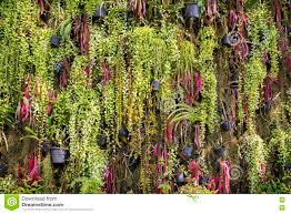 Indoor Garden Wall by Fern Plants In Flower Pots Vertical Indoor Garden Wall In Gard