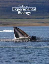 solubility of nitrogen in marine mammal blubber depends on its