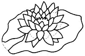 coloriages fleurs et plantes nenuphars à colorier allofamille