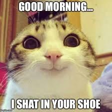Good Morning Cat Meme - smiling cat meme imgflip