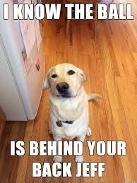 Black Lab Meme - yellow lab memes lab best of the funny meme