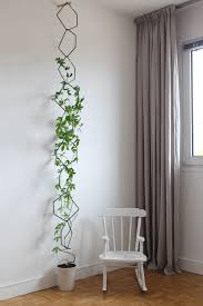indoor vine plant best indoor vines and climbers that are easy to grow