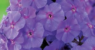 Fragrant Plants For Shade - bloomiq