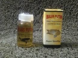 Minyak Bulus Asli Papua minyak bulus asli minyak bulus putih