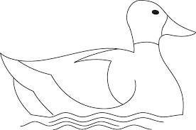 duck coloring download free duck coloring kids