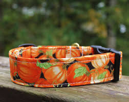 orange kangaroo collar fall collar thanksgiving