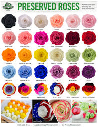 preserved roses variety preserved roses come in all sorts of colors and are made