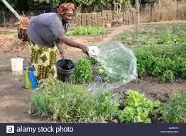 the vegetable gardener penncoremedia com