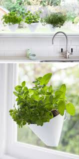 Indoor Garden Wall by Indoor Garden Idea Hang Your Plants From The Ceiling U0026 Walls