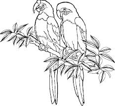 parrot coloring pages 43 coloring pages adults