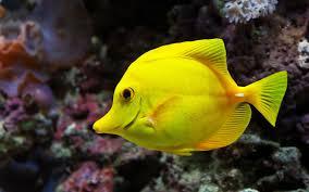 pesacdos animales marinos pinterest tropical fish and animal