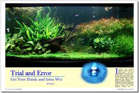 Planted Aquarium Aquascaping Aquascaping World Magazine Trial And Error