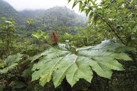 Tropical Plants Pictures - we may finally understand why tropical plants have huge leaves