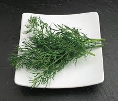 herbe cuisine catalogue marius auda herbes aromatiques