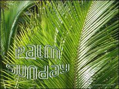palms for palm sunday purchase palm sunday banner palm sunday palm sunday palm