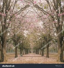 Romantic Tunnel Pink Flower Trees Stock Photo 382835131 Shutterstock