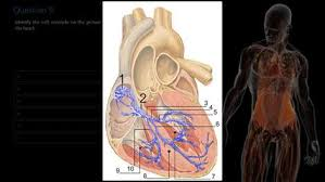 Anatomy And Physiology Chemistry Quiz Get Human Anatomy And Physiology Quiz Microsoft Store