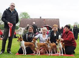 affenpinscher uppf are nordskånska kennelklubbens nationella utställning 2013