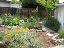 New Permaculture Garden Redwood City Wild Willow Landscape Design - Backyard permaculture design