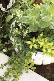 Ideas For Gardening Edible Container Garden Ideas Gardening Earth Living
