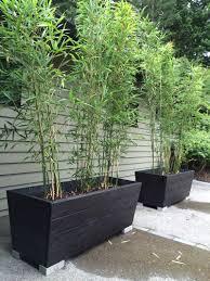 Outdoor Planters Large by Semiarundinaria Fastuosa U0027viridis U0027 I Like This Planter For The