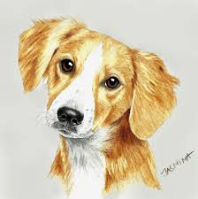 puppy portrait colored pencil drawing by jasminasusak on deviantart