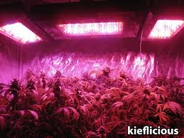 what is the best lighting for growing indoor cannabis grow light breakdown heat cost yields grow