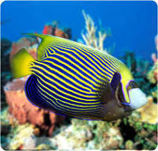 saltwater fish for sale aquariumfish net
