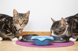 the benefits of a raw food diet for cats