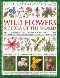 illustrated encyclopedia of flowers flora of the world