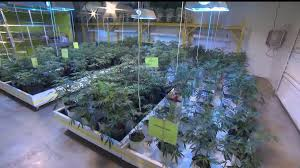 Pennsylvania Medical Power Of Attorney by Some Pa Patients Could Obtain Medical Marijuana This Summer Wpmt