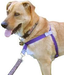 afghan hound de 1 mes 7 tips for a pleasant walk with your dog u2013 iheartdogs com