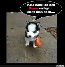 schöne hundesprüche die besten 25 lustige hund bilder ideen auf witzige