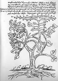 tree of meaning tree of images drawings and images of