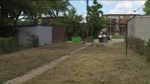 city finally takes down excessive weed grass growth on problem