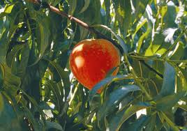 Best Fruit Trees For North Carolina - fall is time to plant fruit trees in la