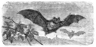 free halloween graphic antique images free halloween clip art vintage flying bat