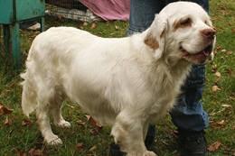 is a bluetick coonhound a good pet bluetick coonhound temperament u0026 personality