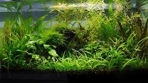 amusing aquascape aquarium plain design a guide to aquascaping the