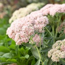 10 Perennials That Thrive In by Top Plants That Thrive In Clay Soil Type Late Summer And Perennials