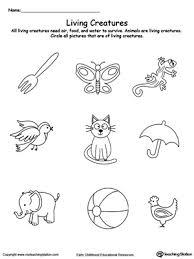 understand living things animals printable worksheets