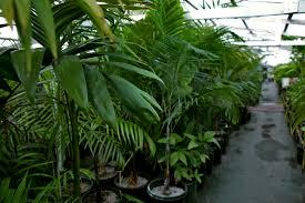 Small Plants For Office Desk by Indoor Nursery Plants Homewood Nursery